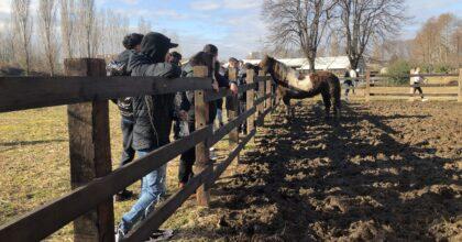 equitazione labor 1